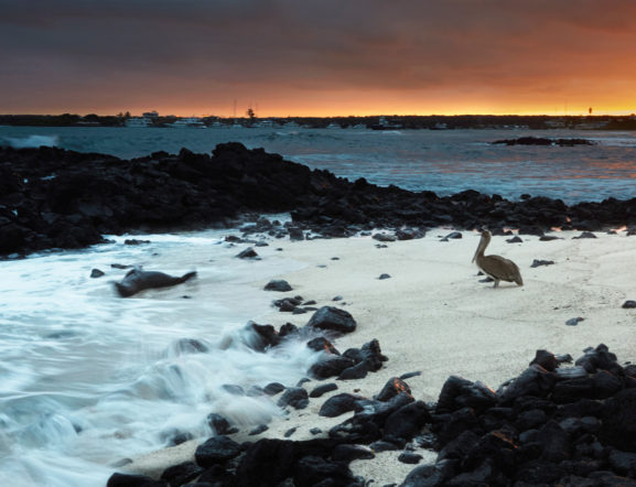 GALAPAGOS YOUR WAY: Visit 1 island