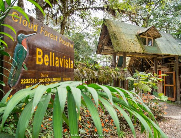 Bellavista Cloudforest Lodge